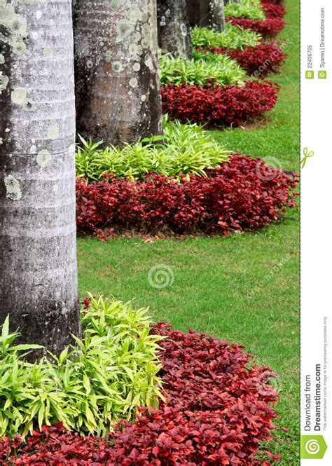 different types of palm plants decorating plant garden stock image image of green