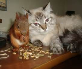 cat and squirrel kitty bloger