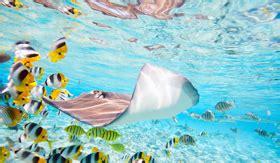 Glass Bottom Boat Bora Bora by Windstar South Pacific And Tahiti Cruises 2018 And 2019