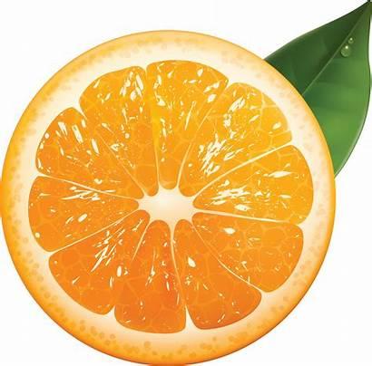 Orange Fruit Juicy Oranges Fruits Flowers Transparent