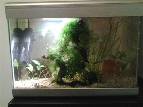 quel aquarium pour un combattant quel aquarium pour un combattant 28 images le betta ou combattant du siam vegetalis le
