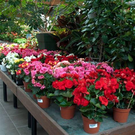garden fiori e piante fiori e piante per il giardino garden bedetti como