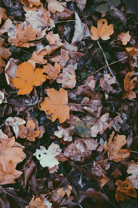 Fall Esthetic Backgrounds by Fall Aesthetic Wallpapers Top Free Fall Aesthetic