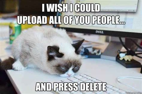 Working Cat Meme - 26 funny angry cat memes for any occasion freemake