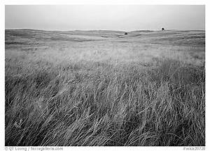 Black And White Grassland Grasses Pictures to Pin on ...