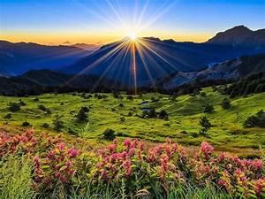 Landscape, Nature, Pink, Flowers, Green, Grass, Meadow, With, Sun, Rays, Sunrise, Desktop, Wallpaper, Full