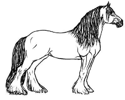 cavallo arabo la bussola della rete