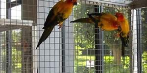 Außenvoliere Selber Bauen : papagei archive voliere bauen ~ Yasmunasinghe.com Haus und Dekorationen
