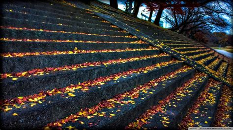 leaves resting  steps  hd desktop wallpaper