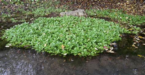 Wie Lege Ich Einen Teich An by Filterteich Biologische Reinigung Kristallklares Wasser