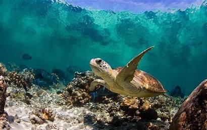 Turtle Backgrounds Pixelstalk