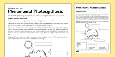 Phenomenal Photosynthesis Worksheet / Worksheet