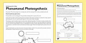 Phenomenal Photosynthesis Worksheet    Activity Sheet