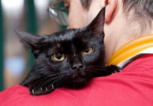 vestibular disease in cats vestibular disorders in cats