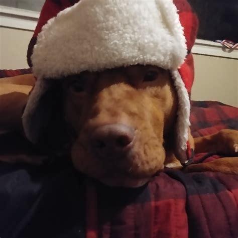 Say Hello To Comrade Doggo Dogpictures