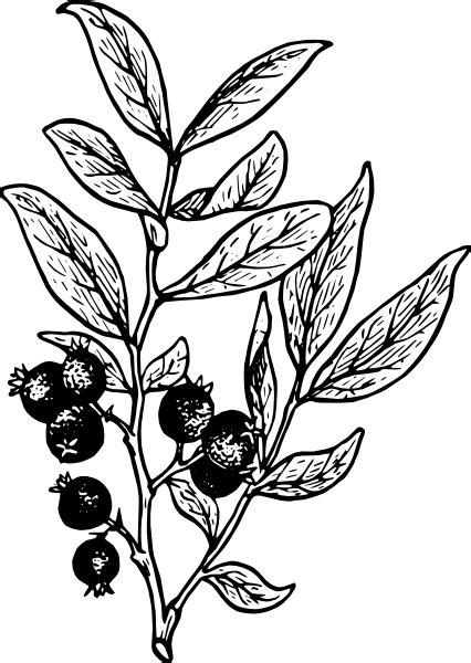 Berry Outline Clip Art at Clker.com - vector clip art
