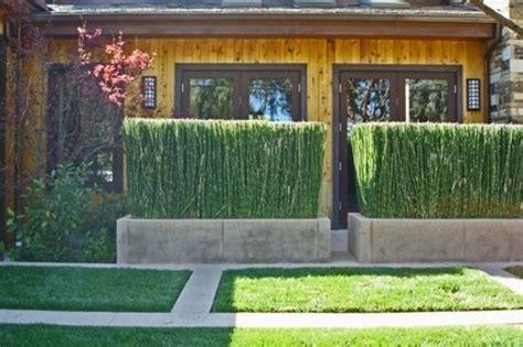 siepi da vaso per terrazzo s di siepe e sempreverdi piante da vaso e per piccoli