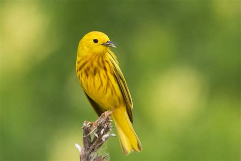 dave zosel s minnesota nature photography bird photography