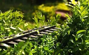 Bäume Beschneiden Jahreszeit : welche pflanzen zur ckgeschnitten werden m ssen mein garten meine tipps ~ Yasmunasinghe.com Haus und Dekorationen