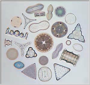 Microscopic Diatoms