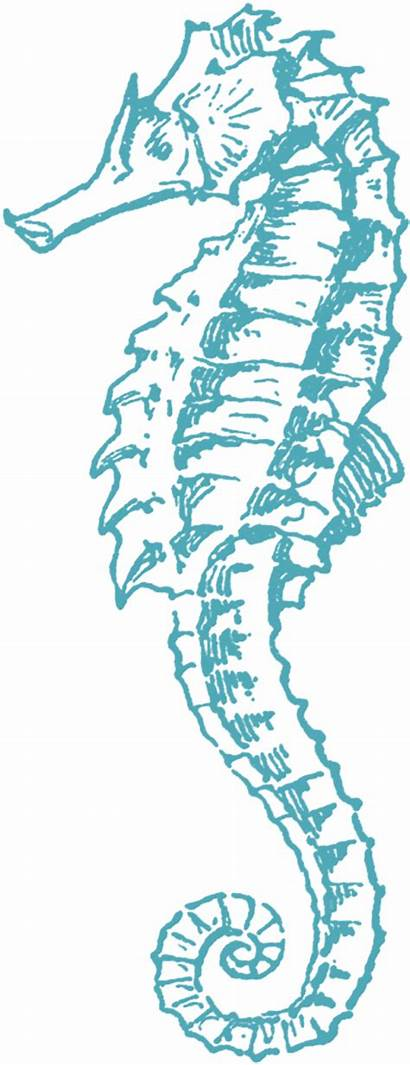 Clip Sea Horse Graphics Fairy Seahorse Printable