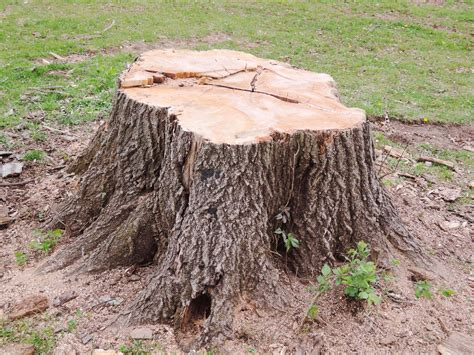 Tree Stump How To Get It Removed?
