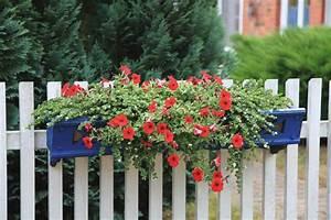 Blumen In Der Box : duden blu men kas ten rechtschreibung bedeutung definition ~ Orissabook.com Haus und Dekorationen