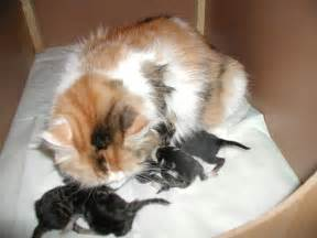 how to take care of a cat how to take care of newborn kittens website of fefidray