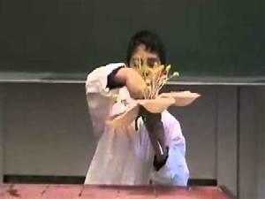 Aufbau Einer Kirschblüte : die 5b wissenschaftsshow erkl rt den aufbau einer bl te youtube ~ Frokenaadalensverden.com Haus und Dekorationen