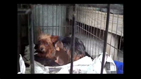 petition 183 richard winslow heartland pets in erie pa