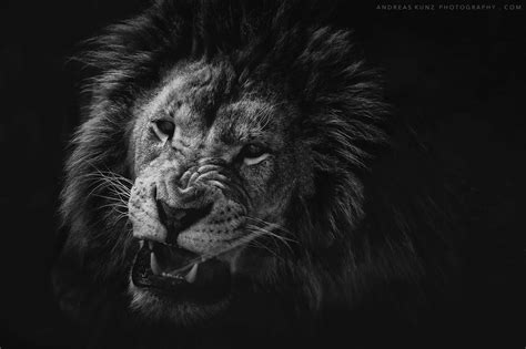 black  white animals andreaskunzphotographycom