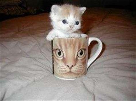 names for calico kittens female kitten names calico