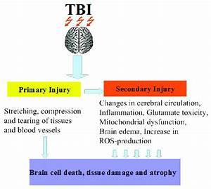 Schematic Diagram Of Head Injury