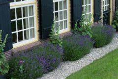 Lavendel Im Topf überwintern : welcher lavendel ist essbar so verwenden sie lavendel f rs kochen ~ Frokenaadalensverden.com Haus und Dekorationen