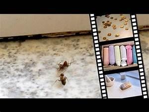Ameisenplage Im Garten Bekämpfen : hausmittel gegen blattl use tipps vom bio balkon g rtner ~ Articles-book.com Haus und Dekorationen