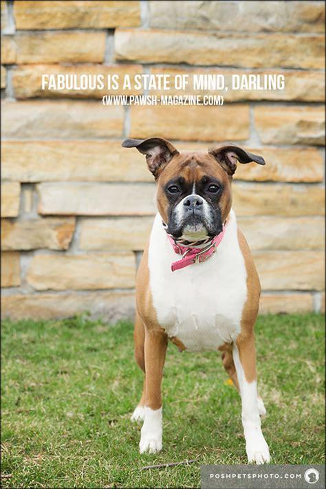 toronto dog photographer inspiring dog quotes pawsh