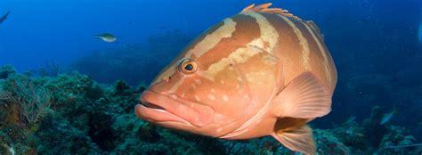 bony physiology anatomy animals seaworld fish grouper fishes
