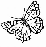Butterfly Coloring Printable Pages Template Templates Colouring Flying sketch template