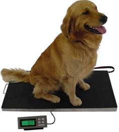 Animal Weight Scale