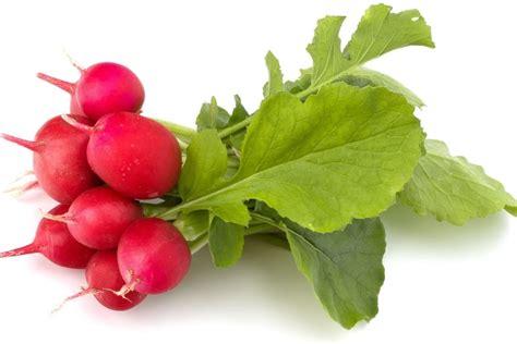cuisiner feuilles de radis radis tout sur cette crudité les différents types de