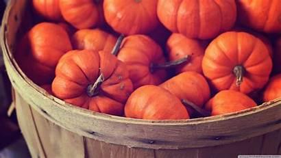 Pumpkin Autumn Pumpkins Desktop Basket Definition