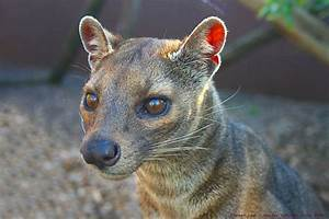 Abe's Animals: 2 of the coolest and endangered animals of ...