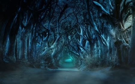 haunted woods forests nature background wallpapers