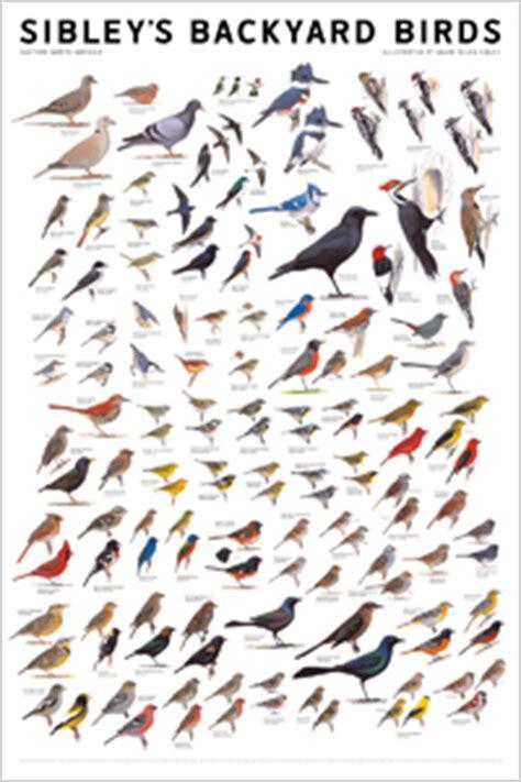 wall poster sibley backyard birds eastern north america