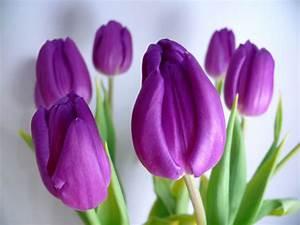 Messer Tulipano su Vacanze in libertà