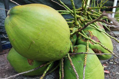 cuisiner un reste de poulet le cocotier et fruit le coco