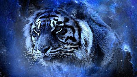Tiger Schonheit Desktop Hintergrund Breitbild High