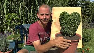 Buchsbaum Schneiden Formen : buchsbaum buxus schneiden herz gestalten youtube ~ A.2002-acura-tl-radio.info Haus und Dekorationen