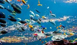 Mandataire Auto Boulogne Sur Mer : week end culturel coquelles avec 1 entr e l 39 aquarium nausicaa pour 2 adultes partir de 181 ~ Medecine-chirurgie-esthetiques.com Avis de Voitures