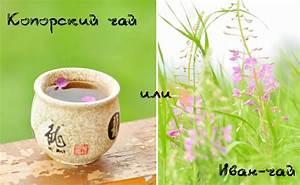 Лечение иван чаем аденомы